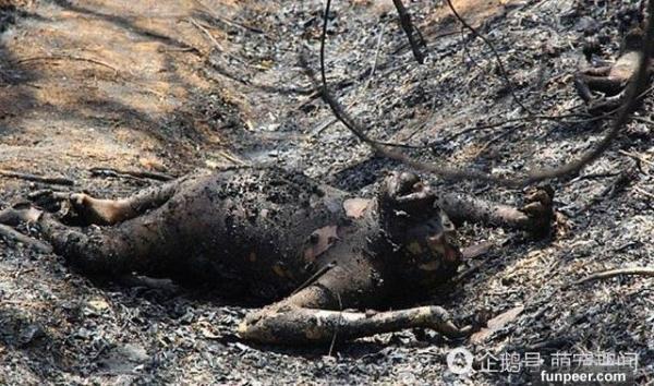 <strong>男子路过烧焦树林,闻到一阵烤肉香味,过去一看竟发现几具巨大的尸体,吓得他</strong>