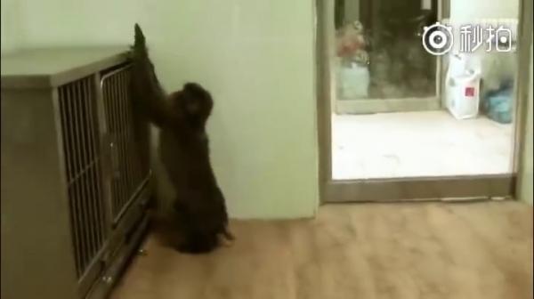 <strong>小猴子遭受同伴霸凌,对外界感到恐惧把自己关在笼子里...直到「牠」的出现,结局暖哭全网!</strong>